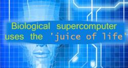 siliconreview-biological-supercomputer-uses-the-juice-of-life