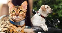 siliconreview-cats-and-dogs-being-tracked-whoa-is-that-so-easy