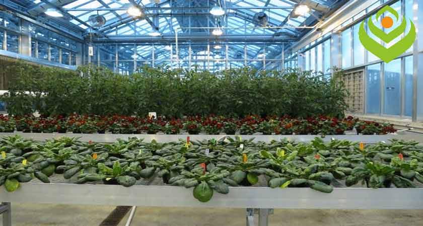 Verano365 launches new adjuvant Evofactor to Improve Fertilizer efficiency