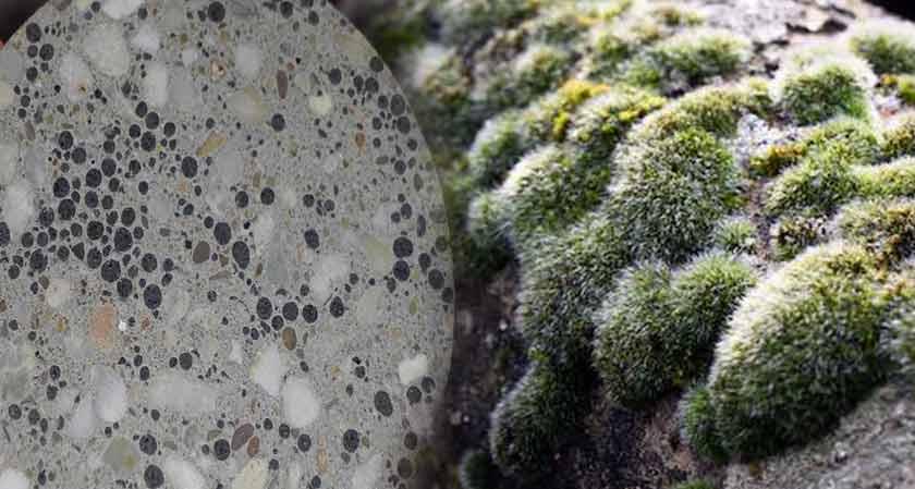 Scientists Create Living Concrete