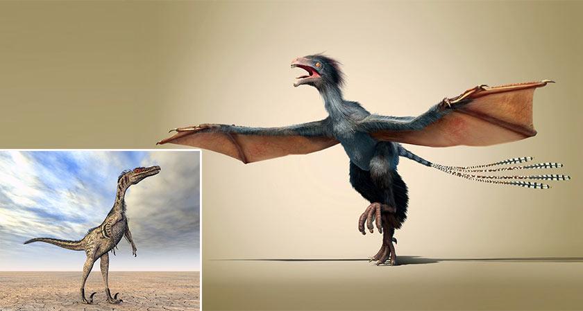 Palaeontologists Find Dinosaur Feathers