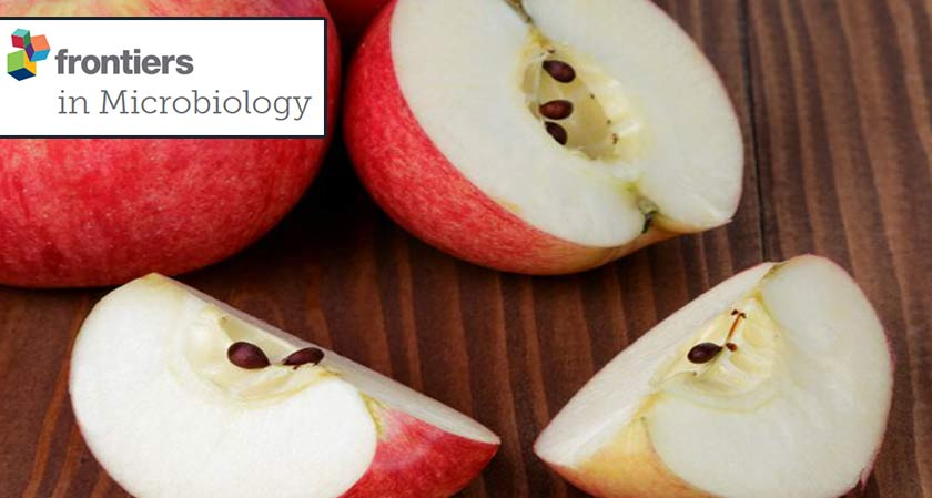 Research proves that eating apple seeds are beneficial for health