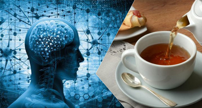Drinking tea improves brain health and organizes brain regions