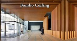 siliconreview-bamboo-ceiling-causes-the-chinese-exodus