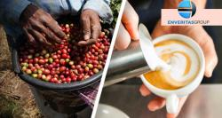 siliconreview-enveritas-helps-small-farmers-to-grow-sustainable-coffee-