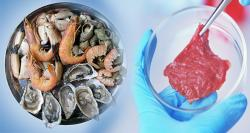 siliconreview-fish-alternative-lab-grown-meat