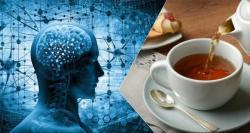 Drinking tea improves brain health and organizes brain regions